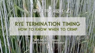 Rye Termination Timing: When to Successfully Crimp