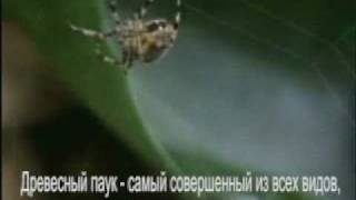 Смотреть онлайн Что будет если дать паукам попробовать наркотики