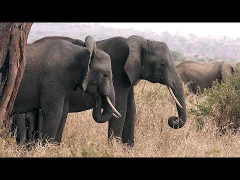 Blog Feature Video - November Serengeti