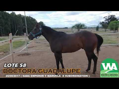 Lote DOCTORA GUADALUPE