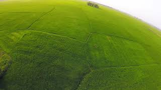 The Green #FPV #Freestyle
