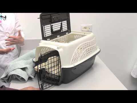 1. Cat Friendly Practices® Can Reduce Stress of Vet Visits - Cat Owners