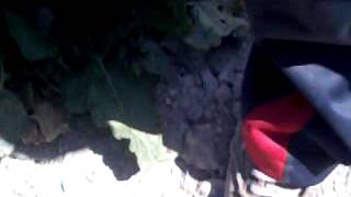 el entierro de bichito :'(