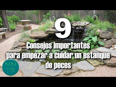 9 Consejos para empezar a cuidar un estanque de peces