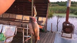 В кузнецке пензенской области рыбалка
