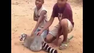 Подборка.   حيوانات مثيرة للاهتمام