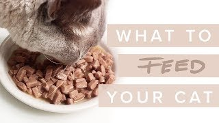 What Should I Feed My Cat? - Cat Nutrition with Dr Darren Foster & Dr Kate Adams [ Part 1/3 ]
