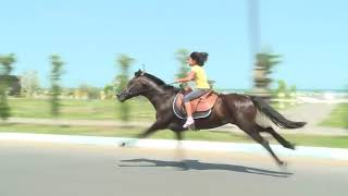 Super Lady || HORSE Riding || Horse Game || Fast Horse Riding