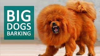 big dogs barking loud - Thủ thuật máy tính - Chia sẽ kinh nghiệm sử