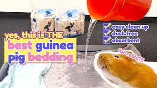 Best Bedding For Guinea Pigs (2020) | GuineaDad