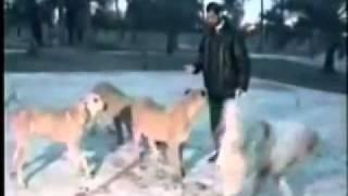 تحميل و مشاهدة عدي صدام حسين يطعم اسوده نادر MP3