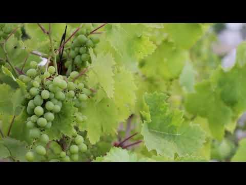 On the Wine