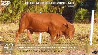 Coro 2299 b4