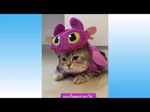 Cute Pets And Funny Animals Compilation #1