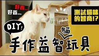 【黃阿瑪的後宮生活】手作益智玩具,測試貓咪的智商?