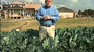 Grow assorted cool-season vegetables in Louisiana gardens