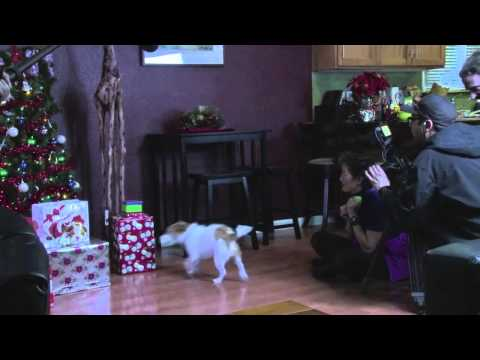 Behind the Scenes: Jack Russell Christmas