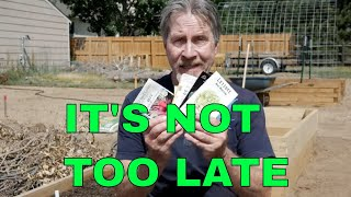 What to Plant in Late Summer (For a Fall Harvest)