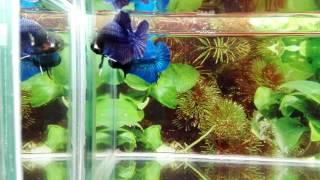 HMPK Mármoles azules