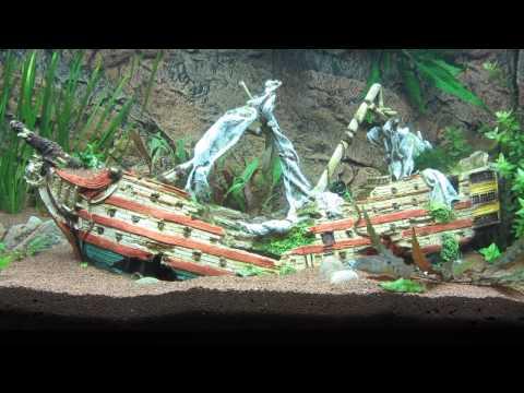 Aquarium mit Schiffswrack und Buntbarschen - FISH TANK with shipwreck and cichlids