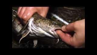 Рыбалка на налима в калининграде