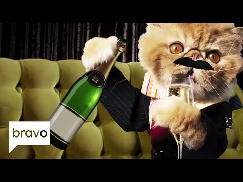 Shahs of Sunset: Meet Les Chats de Sunset! (Season 6)   Bravo