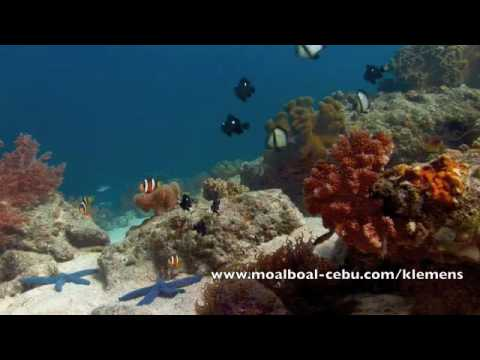 Korallenriffe in Moalbaol, The Blue Abyss Dive Shop,Cebu,Philippinen