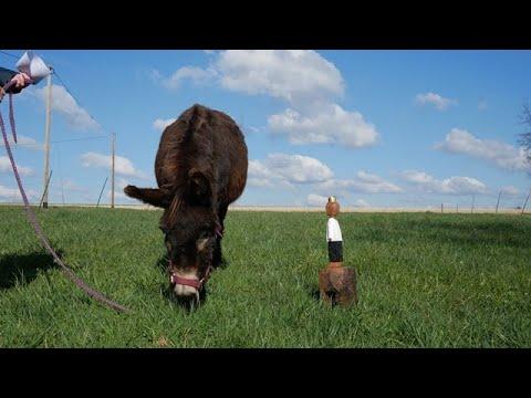 Wenn ein König auf einen Esel trifft