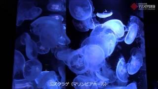 新潟の観光名所〜マリンピア日本海