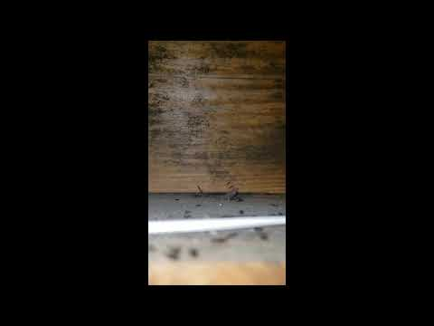 Pool Shed Filled with Ants in Spring Lake, NJ