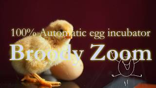 "Автоматический инкубатор-конструктор  Zoom 180 яиц от компании Интернет-магазин ""УчастОК"" - видео"