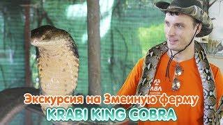 Экскурсия на Змеиную ферму Snake Krabi King Cobra 🐍 В клетке с королевскими кобрами
