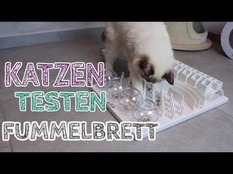 Meine KATZEN testen Fummelbrett CAT ACTIVITY FUN BOARD   Indoor Beschäftigung für Katze