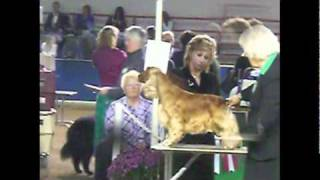 Video- Best of Breed