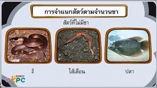 สื่อการเรียนการสอน การจำแนกสัตว์ตามโครงสร้าง ป.1 วิทยาศาสตร์