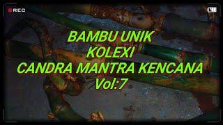 Bambu Unik Antik Ajaib Aneh Dan Langka( Vol 7 ).unique Bamboo. 珍稀的竹子