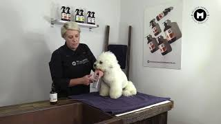How to Brush a Bichon Frise ( Curly Coat)