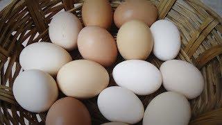 Huevo De Rancho Parte 2 Cap 37
