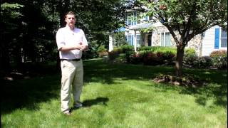 Clip Tip: How to Tell if your Lawn Needs Watering