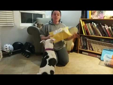 Unboxing Moo Moo's First Service Dog Vest!