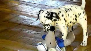 DADA.Funny dog . LILU.