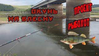Рыбалка в красноярском водохранилище на карпа
