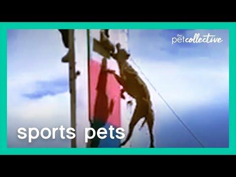 בעלי חיים עם כישרון ספורטיבי חמוד ומצחיק