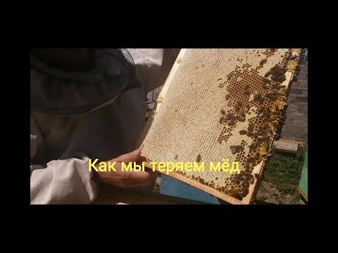 Как сработала Пчело семья на главном взятке, после противороевой от Демари.