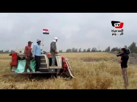 محافظ بورسعيد يشهد بدء موسم حصاد القمح