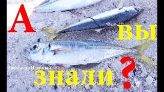 Рыбалки на черном море с берега