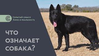 Что означает собака? Дополнение к разбору «Сталкера». Философия мифологии