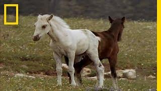 Wild Horse - Territory