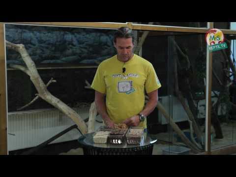 Reptil.TV - Folge 20 - Boden-Substrate und Ihre Verwendung