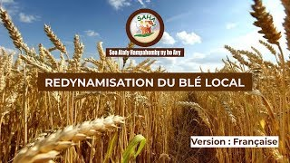 REDYNAMISATION DU BLÉ LOCAL, Film Programme MATOY